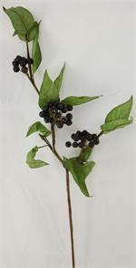 Buckthorn Spray